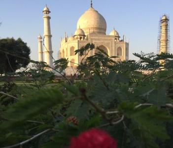 Taj Mahal from the exotic gardens