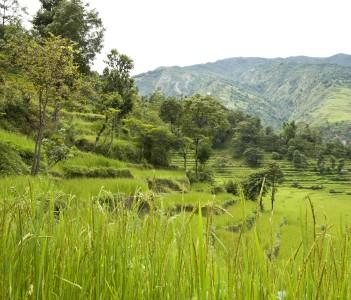 Terraced rice fields below Bahundanda village, Lamjung district, Nepal