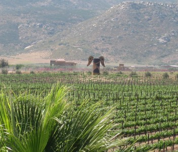 Vineyards at Guadalupe Valley
