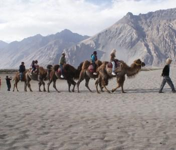 Bacterian camel ride on sand dunes, Hunder, Nubra Valley