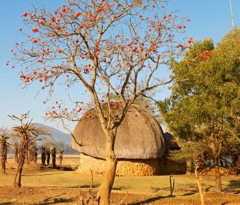 Mlilwane wildlife nature reserve