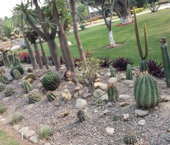 Cactus park in Panchkula Haryana