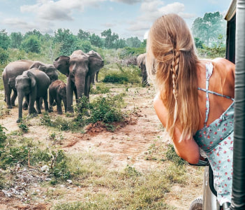 Moments with Elephants