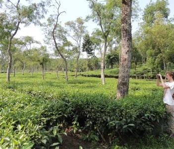 Tourist at world biggest Tea Garden
