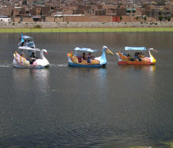 Swans on the Lagoon