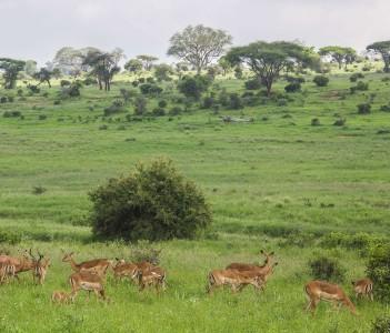Tsavo West National Park, Kenya.