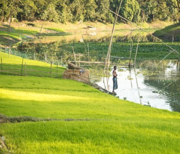 Green rice Paddy on the riverbanks and a young man fishing in the river in Mymensingh Bangladesh