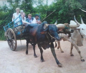 Bull cart ride to the villege