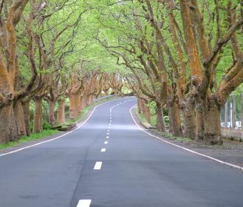 Terceira Island Road