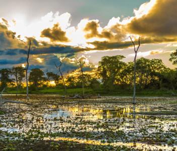 Pantanal River in Brazil in Miranda