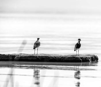 Birds standing on a rock platform at Lake Langano in Ethiopia
