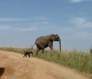 elephant and calf @ mara