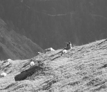 Goshaini, Himachal Pradesh