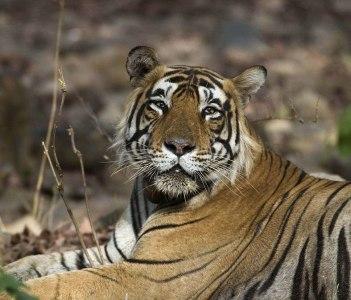 Ranthambhore Tiger Reserve