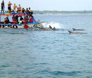 Dolphin trip marine park