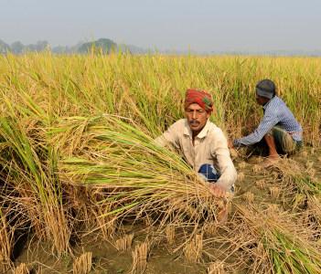 Bangladeshi farmers Jessore Bangladesh