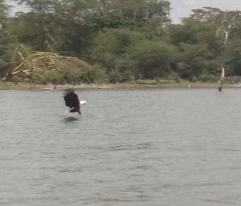 Exploring the lake Naivasha on a boat ride