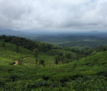 Tea estate on Chembra Peak , Wayanad , Kerala