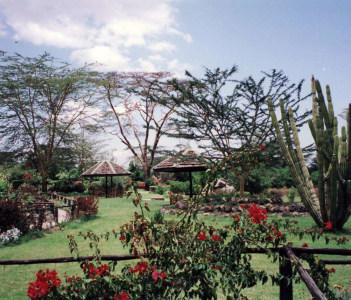 Acacia Trees and Candelabra Cactus Lake