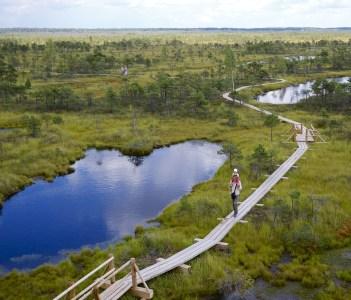 Atjaunotā Ķemeru purva taka