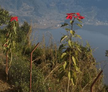 Annapurna &fewa lake