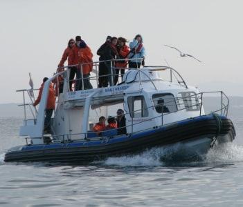 Whale watching, Gansbaai