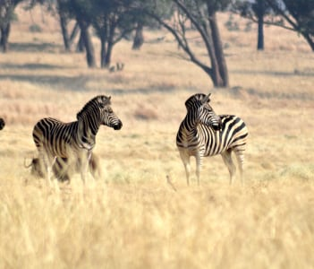 Lion Park Safari Krugersdorp