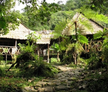 Lodge in cloud forest