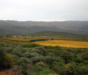 Hex Valley