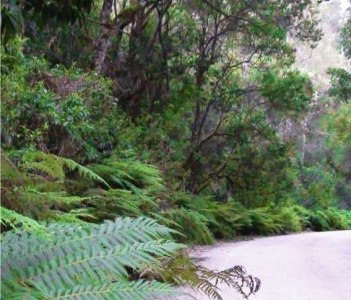 Knysna Forests, South Africa with  Walk on the Wild Side and Howard Butcher