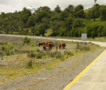 Puerto Natales Road