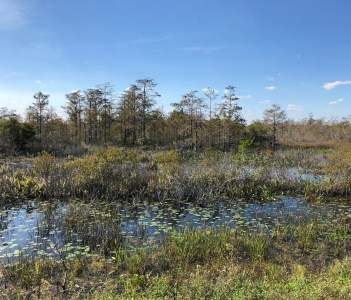 Loxahatchee Slough Natural Area Palm Beach Gardens, Florida, USA, Swamp Landscapes and wetland fauna
