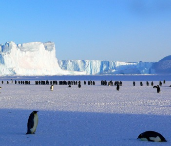 Penguins at Antarctica