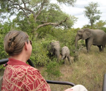 Elephant in Hoedspruit, South Africa