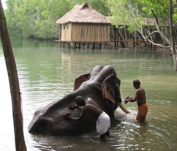 Elephant rehabilitation .