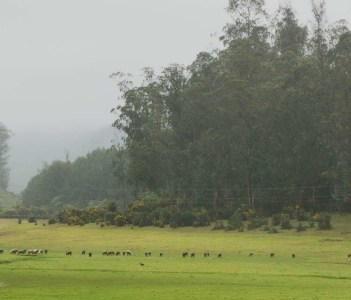 Beautiful Ooty Landscapes