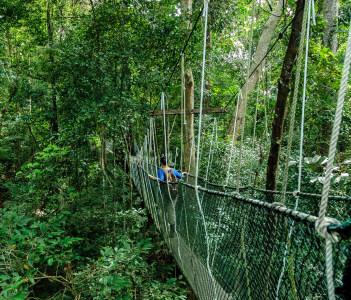 Canopy bridge in Taman Negara Malaysia