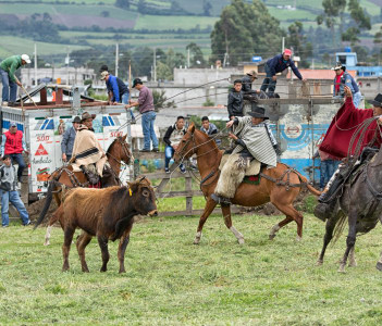 Cowboys roping a bull in a rural rodeo Machachi Ecuador