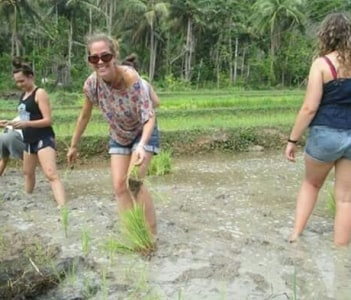 experiencing paddy cultivation