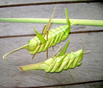 Folded Palm Leaf Grasshoppers