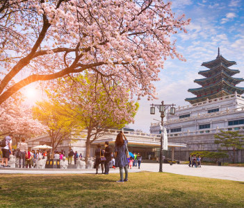 Gyeongbokgung Palace with Cherry Blossom in Spring, Seoul, Korea