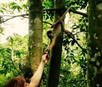 Spotting Monkey in Januari Park Resort