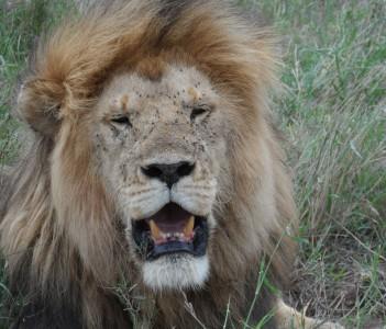 serengeti national park.
