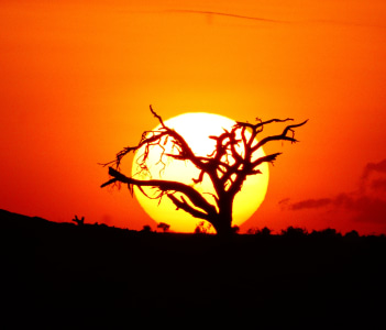 Sunset in Amboseli National park while on a game drive