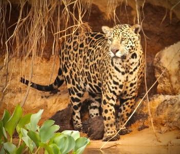 safari brazil