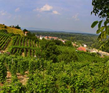Vineyard and hills Tokaj Borsod Abauj Zemplen Hungary