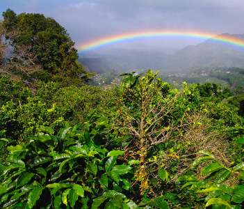 Coffee Plantation and Rainbow in Boquete