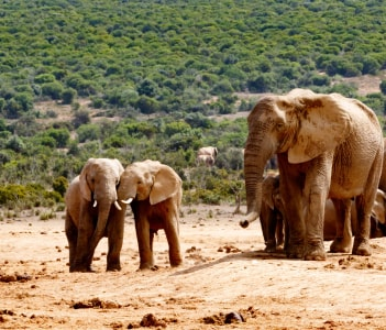The Addo Elephant National Park is a diverse wildlife conservation park situated close to Port Elizabeth in South Africa