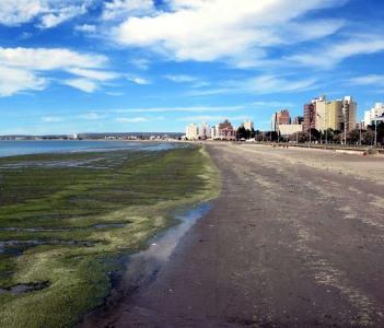 Beach with Algae