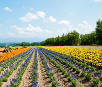 Sapporo Farming